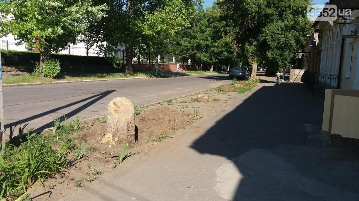 Херсонська влада не реагує на знищення дерев у центрі, фото-1