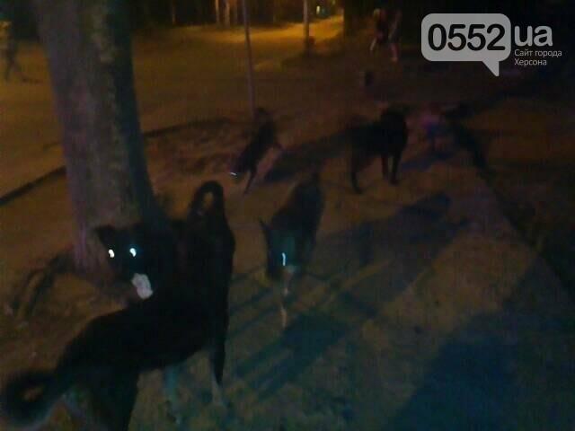 У Херсоні вулицями Карантинного острова гуляють безпритульні тварини, фото-1