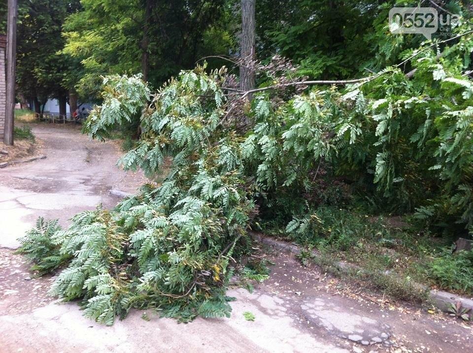 В Херсоне упала ветка и перекрыла дорогу, фото-1