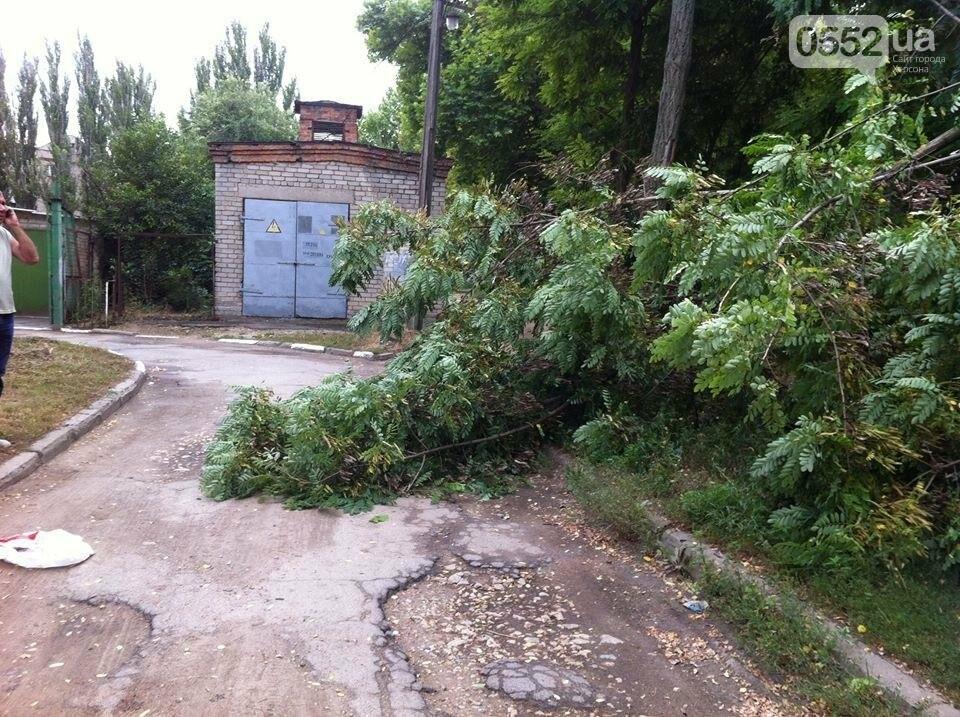 В Херсоне упала ветка и перекрыла дорогу, фото-2
