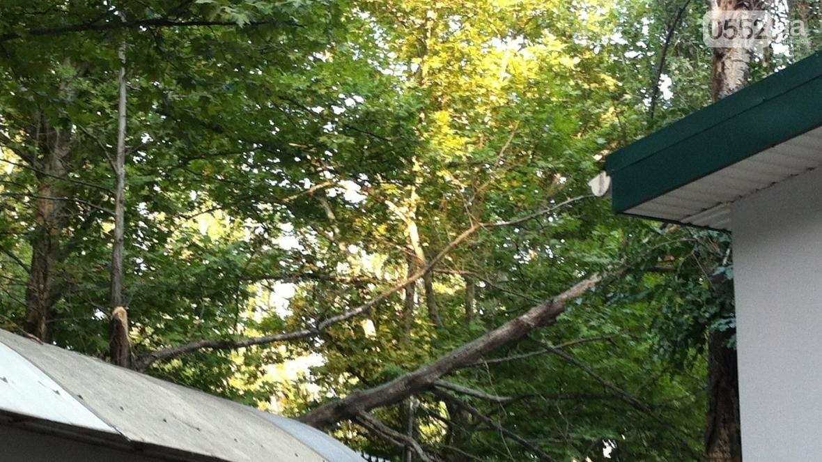 В Херсоне упало дерево, фото-1