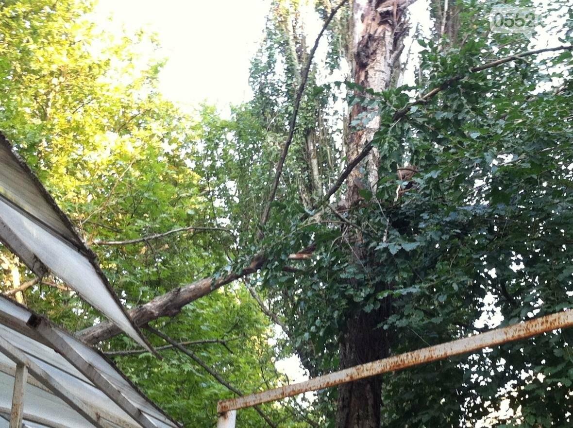 В Херсоне упало дерево, фото-4