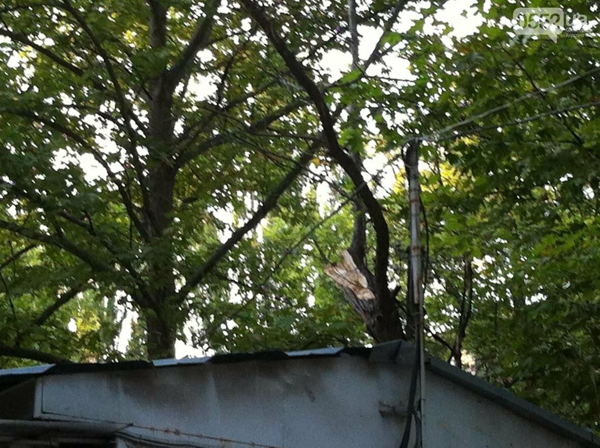 В Херсоне упало дерево, фото-3