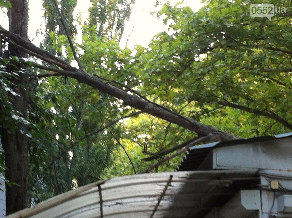В Херсоне упало дерево, фото-2