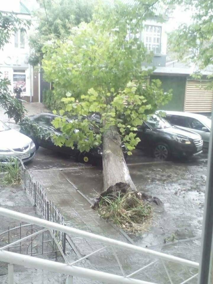 В Херсоне упавшее дерево повредило две машины (фото), фото-1