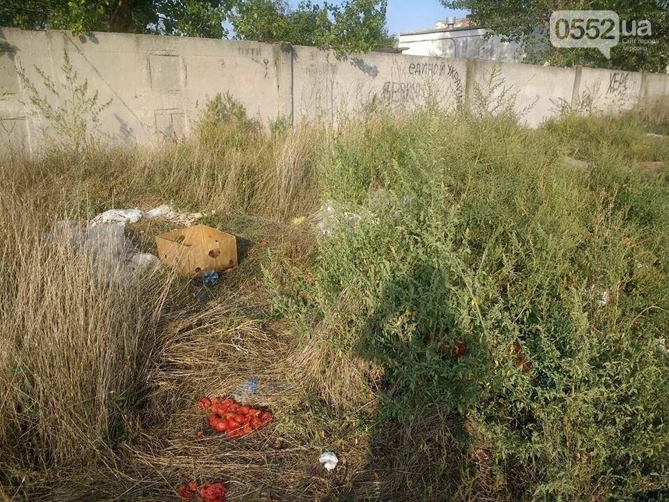 На Херсонщине пустырь превратился в стихийную свалку (фото), фото-4