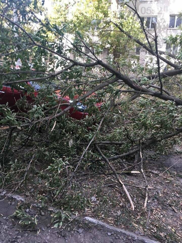В Херсоне упавшее дерево повредило два автомобиля (фото), фото-1