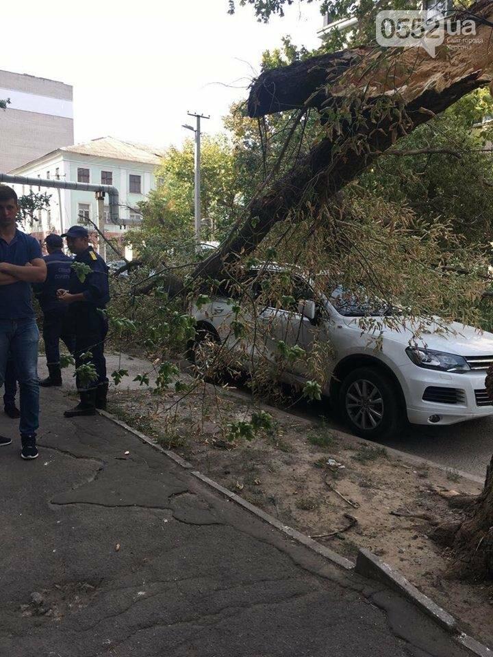 В Херсоне упавшее дерево повредило два автомобиля (фото), фото-2