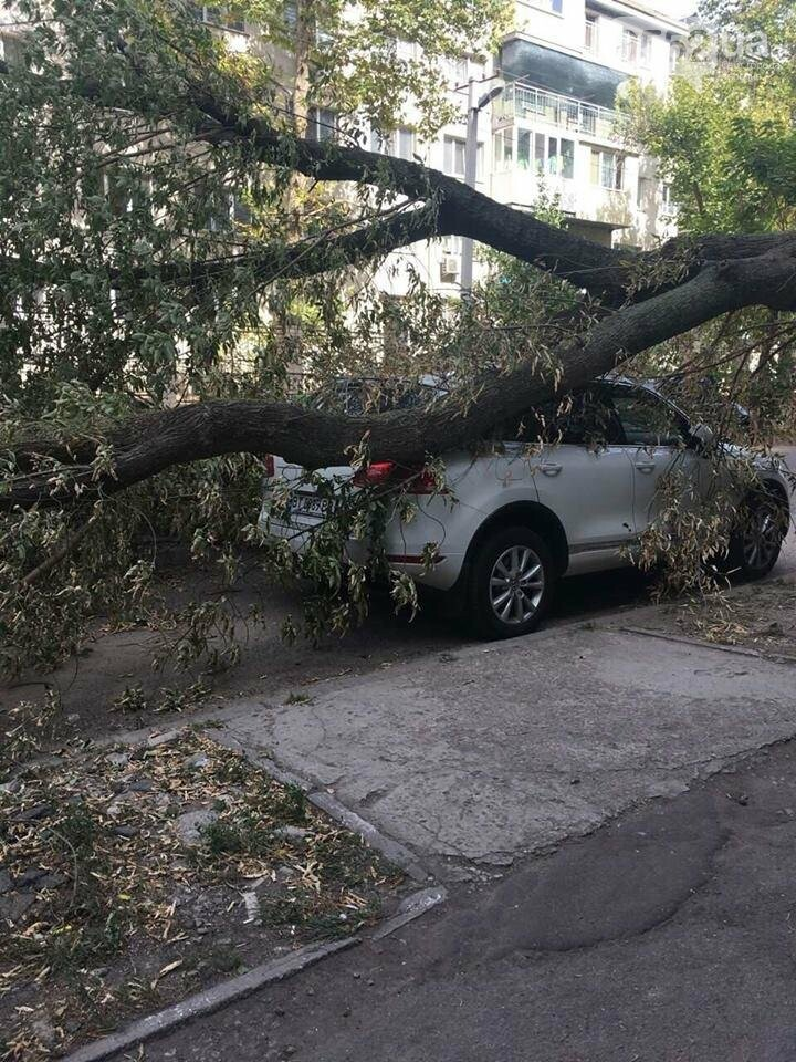 В Херсоне упавшее дерево повредило два автомобиля (фото), фото-3