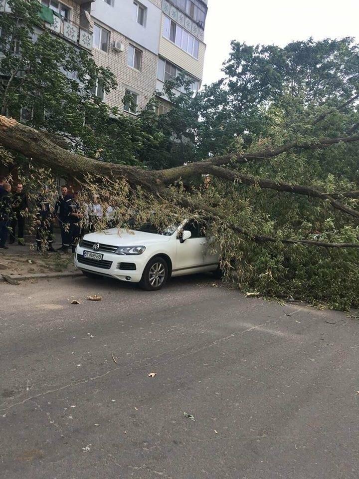 В Херсоне упавшее дерево повредило два автомобиля (фото), фото-4