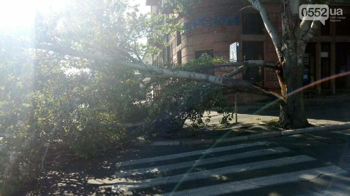 В Херсоне упало еще одно дерево (фото), фото-1