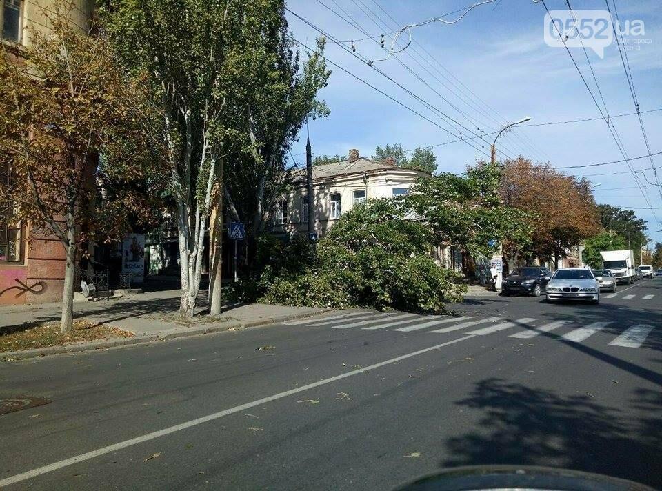 В Херсоне упало еще одно дерево (фото), фото-2