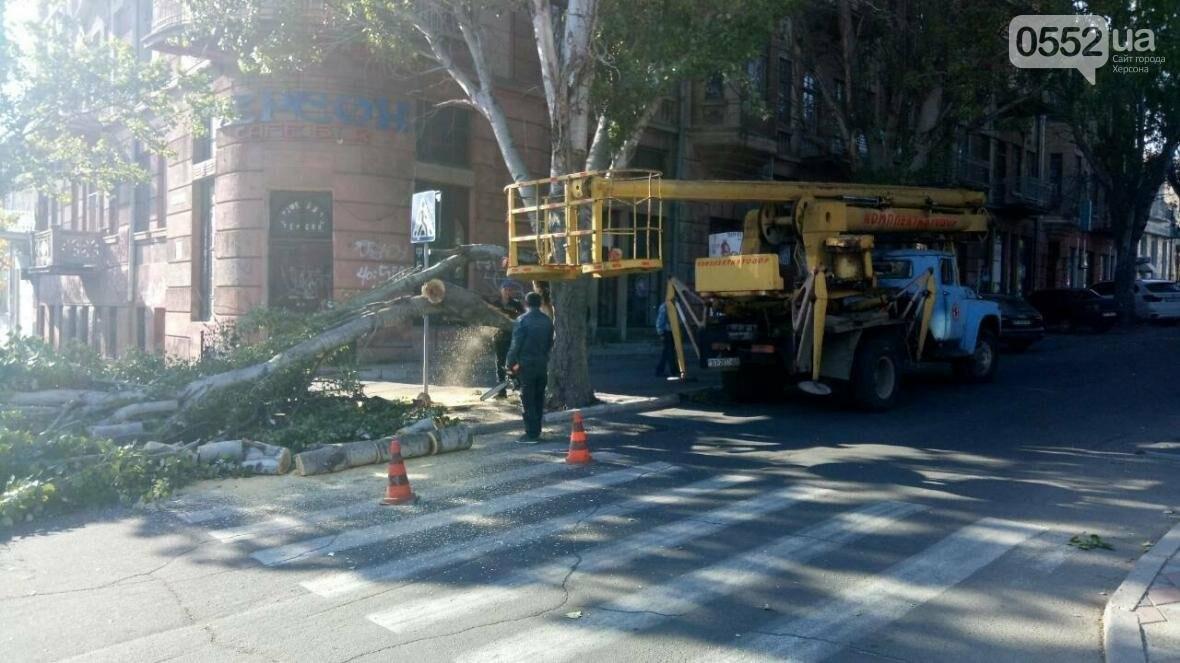 В Херсоне упало еще одно дерево (фото), фото-3