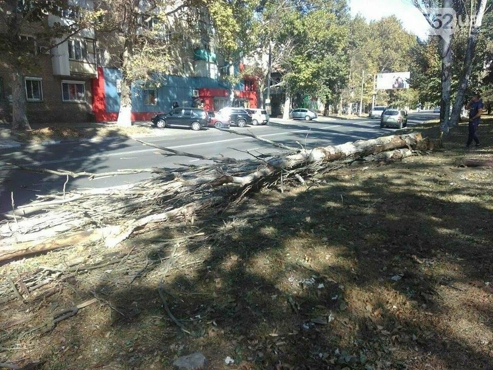 В Херсоне упал очередной тополь (фото), фото-1