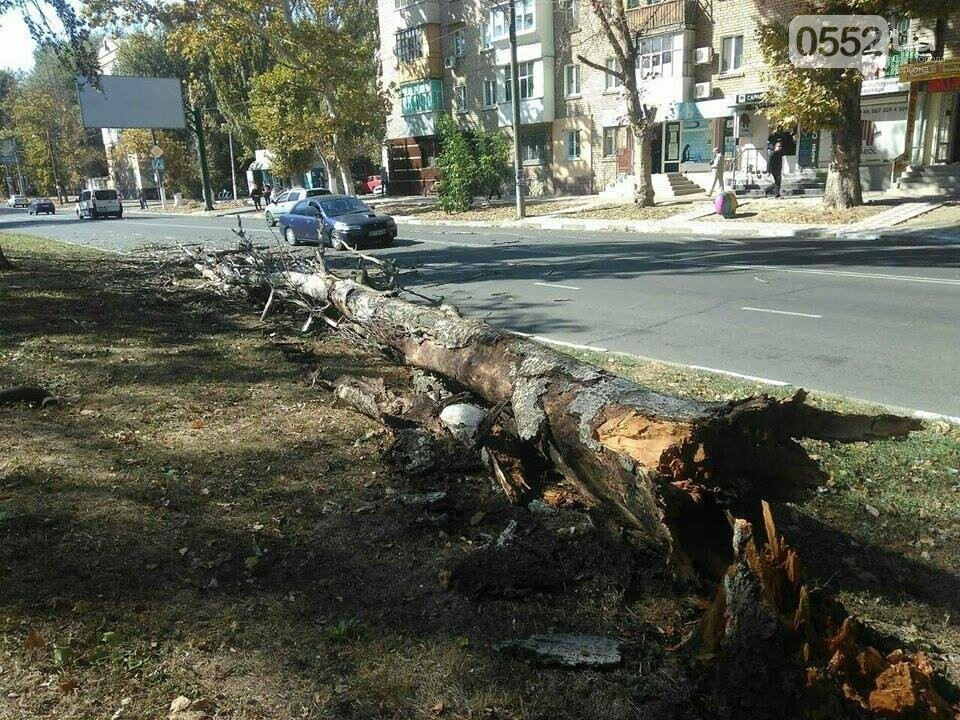 В Херсоне упал очередной тополь (фото), фото-2