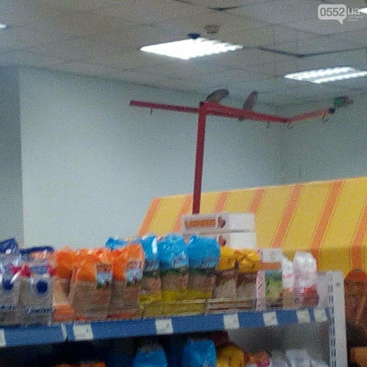 """""""Птицы летают в зале, гадят, а работникам всё равно"""", - херсонец о походе в супермаркет, фото-1"""