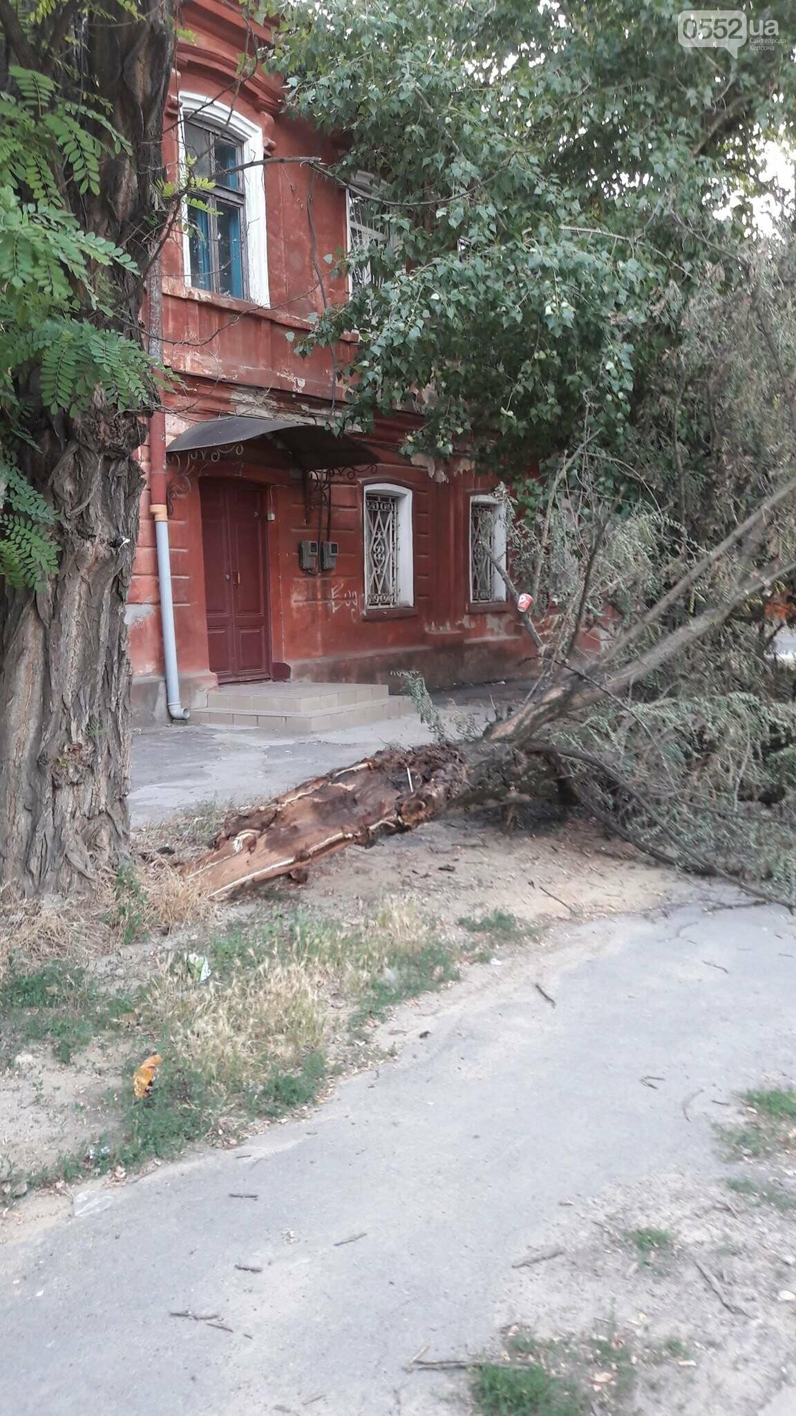 В Херсоне упавшая ветка перекрыла тротуар (фото), фото-2
