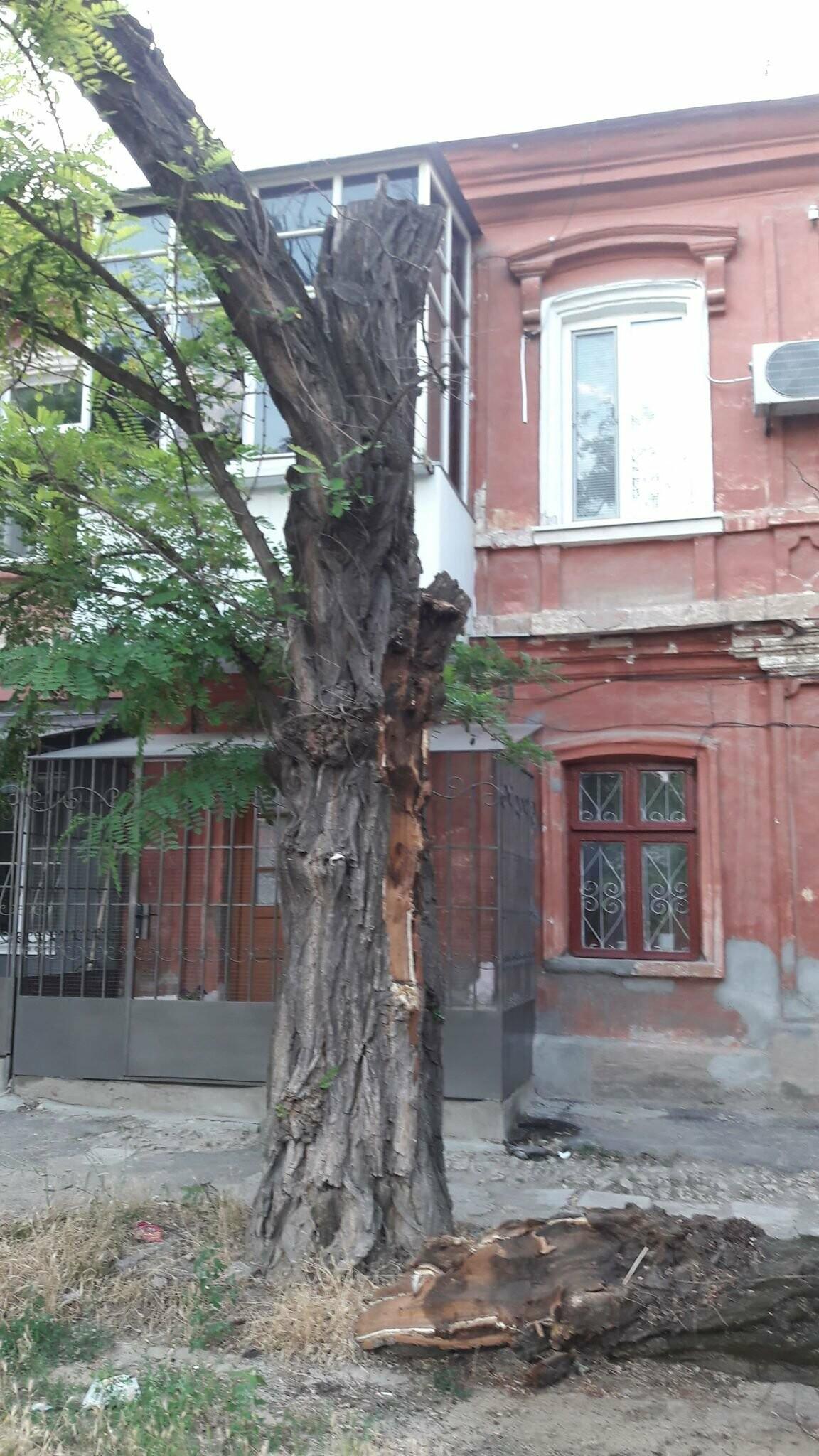 В Херсоне упавшая ветка перекрыла тротуар (фото), фото-1