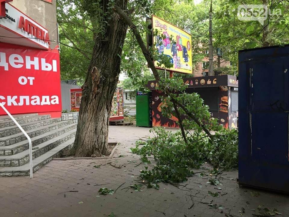 На херсонском рынке упала ветка. Никто не пострадал (фото), фото-1
