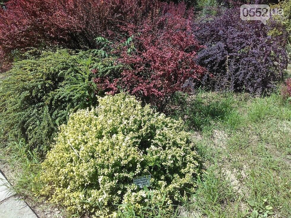 У работников херсонского Ботанического сада грандиозные планы, фото-4