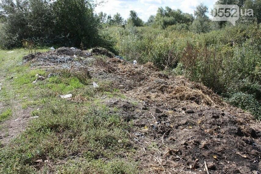 На Херсонщине плавни превратились в скотомогильник и свалку, фото-10