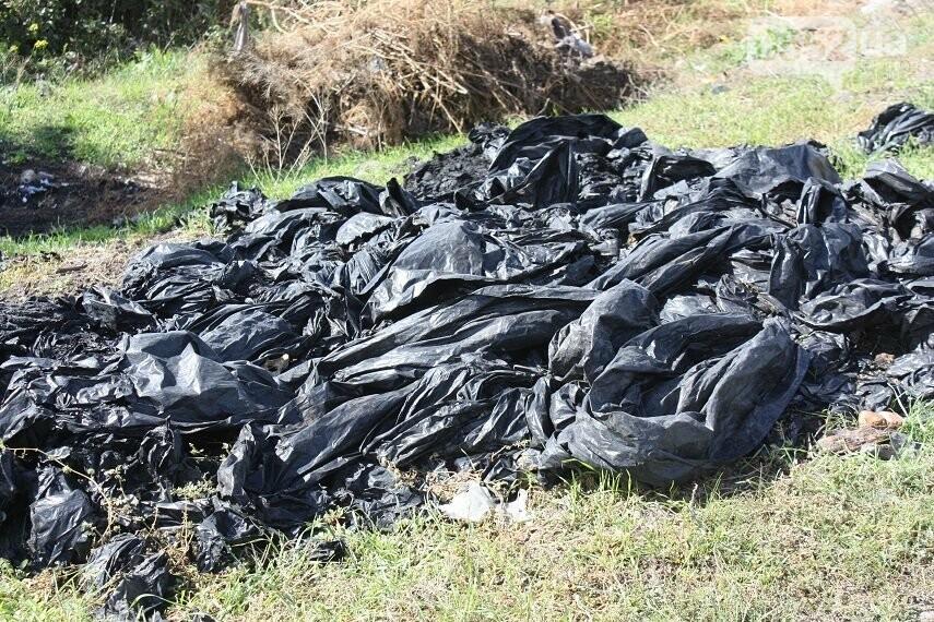 На Херсонщине плавни превратились в скотомогильник и свалку, фото-8