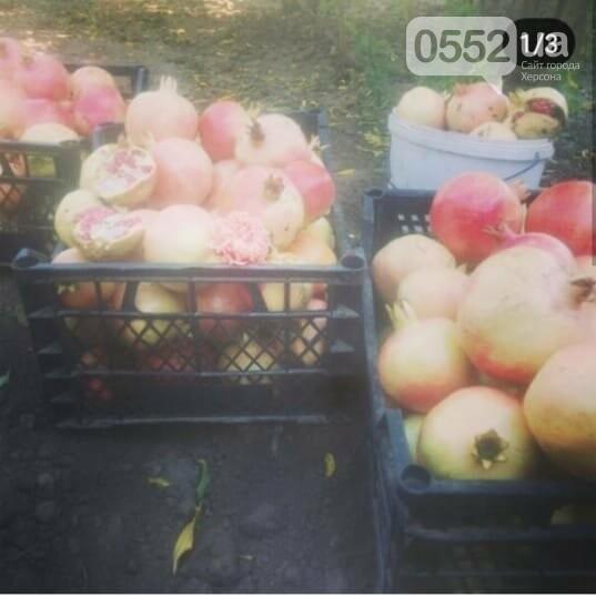 На Херсонщине расцвели экзотические гранаты: к осени ожидается приличный урожай , фото-3