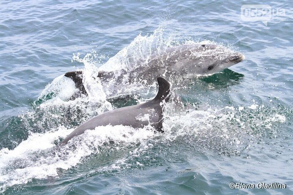 В акватории Черного моря на Херсонщине резко снизилось количество дельфинов, фото-2