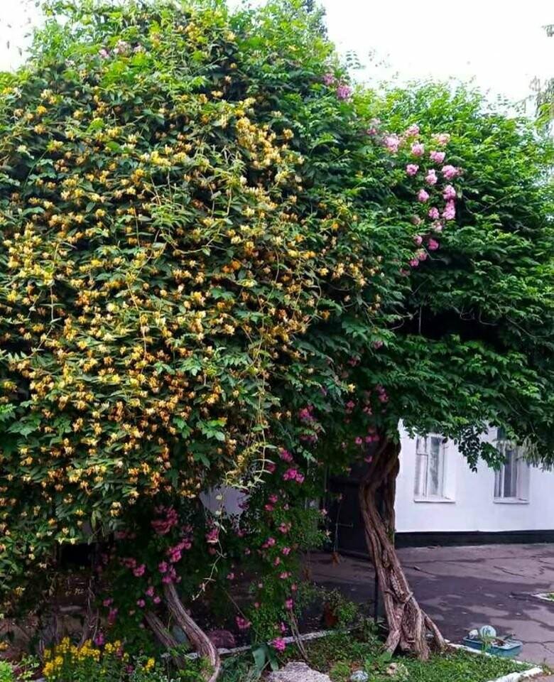 В Херсонском ботаническом саду прижилися новый обитатель , фото-7