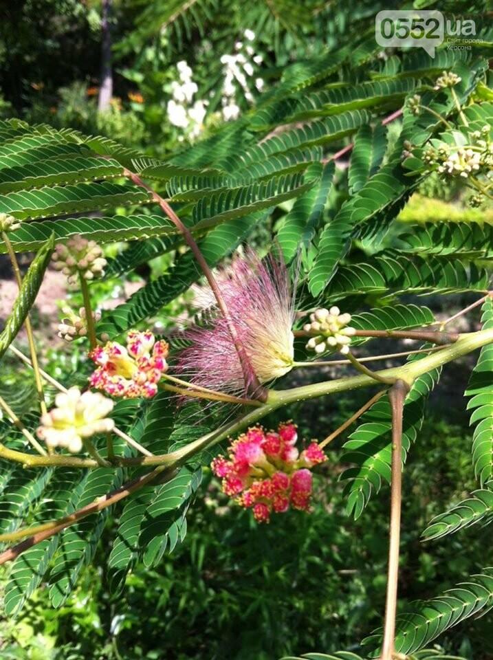 В Херсонском ботаническом саду прижилися новый обитатель , фото-6