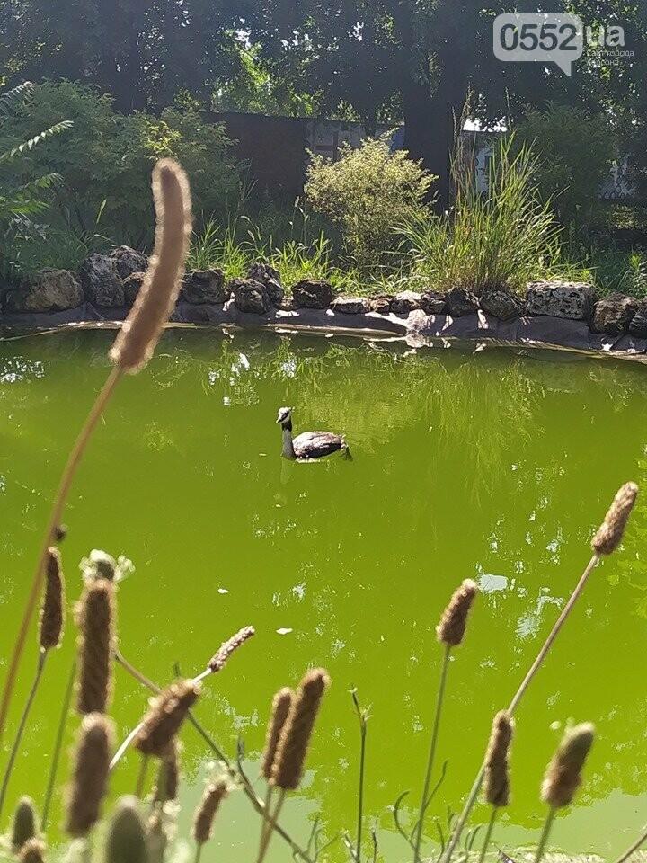 В Херсонском ботаническом саду прижилися новый обитатель , фото-3