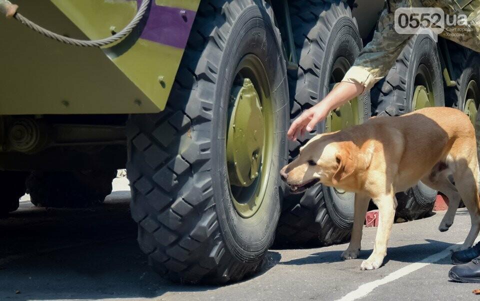В Херсоне лучшие служебные собаки со всей области искали наркотики, взрывчатку и оружие, фото-4