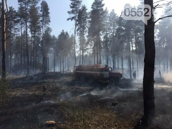 Выбились в лидеры: Херсонская область - первая по количеству лесных пожаров с начала года, фото-3