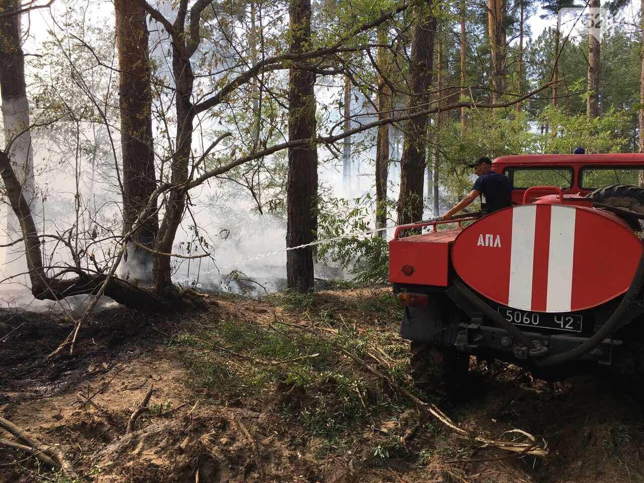 Выбились в лидеры: Херсонская область - первая по количеству лесных пожаров с начала года, фото-2