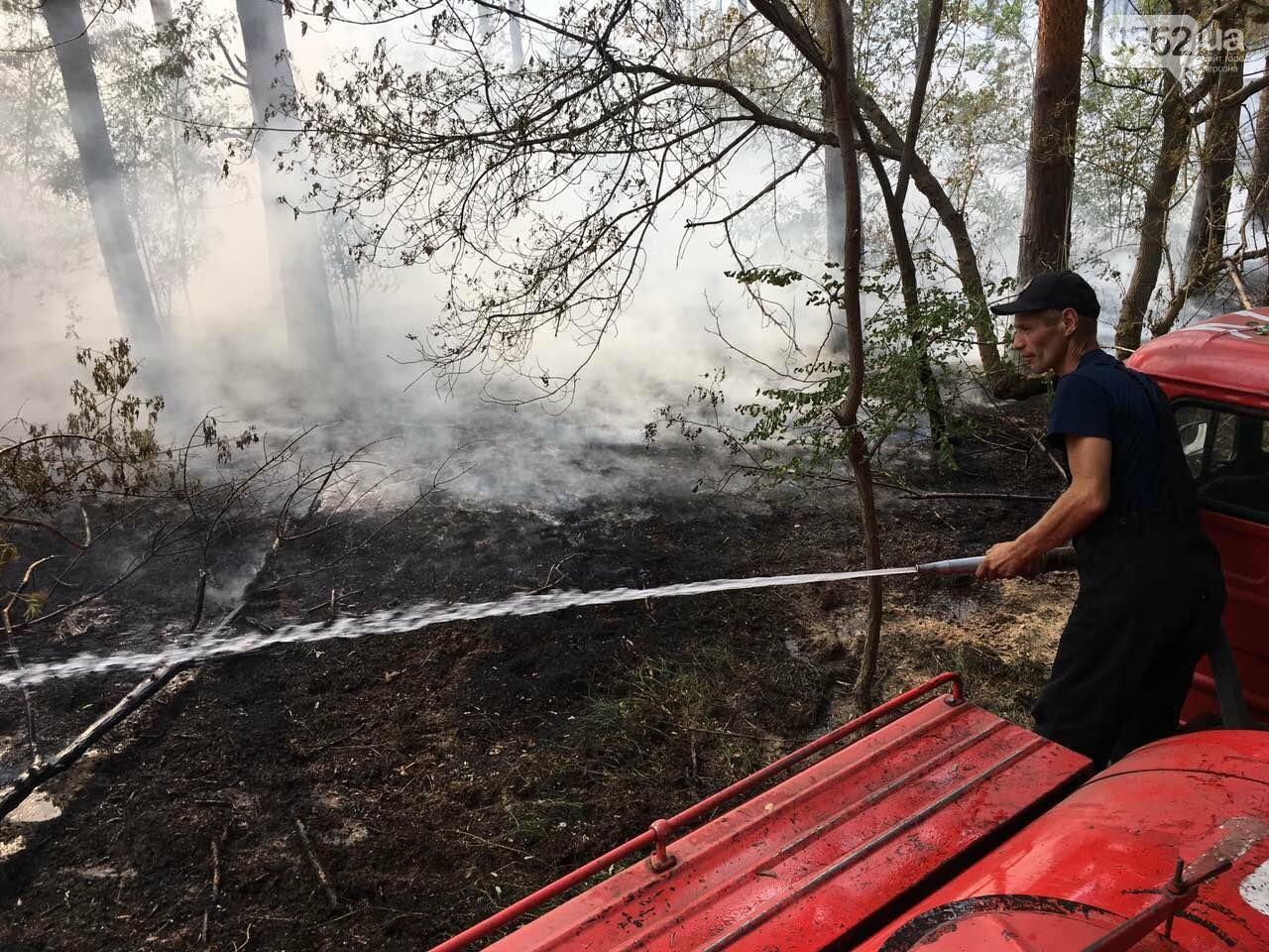 Выбились в лидеры: Херсонская область - первая по количеству лесных пожаров с начала года, фото-1