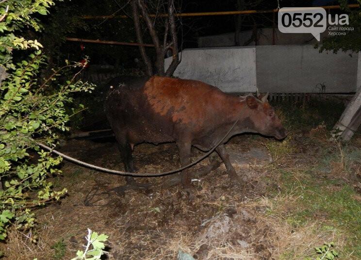 В Херсонской области спасли корову: буренка провалилась в сливную яму, фото-1