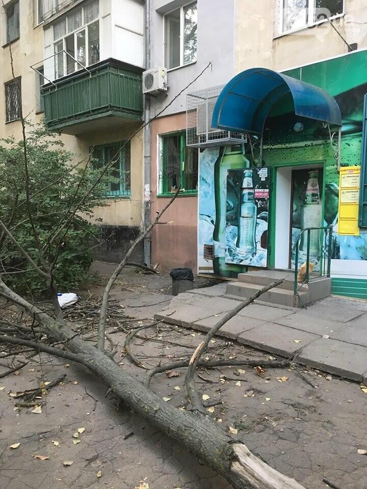 В Херсоне на головы пешеходов рухнуло огромное дерево: люди отделались шоком, фото-1