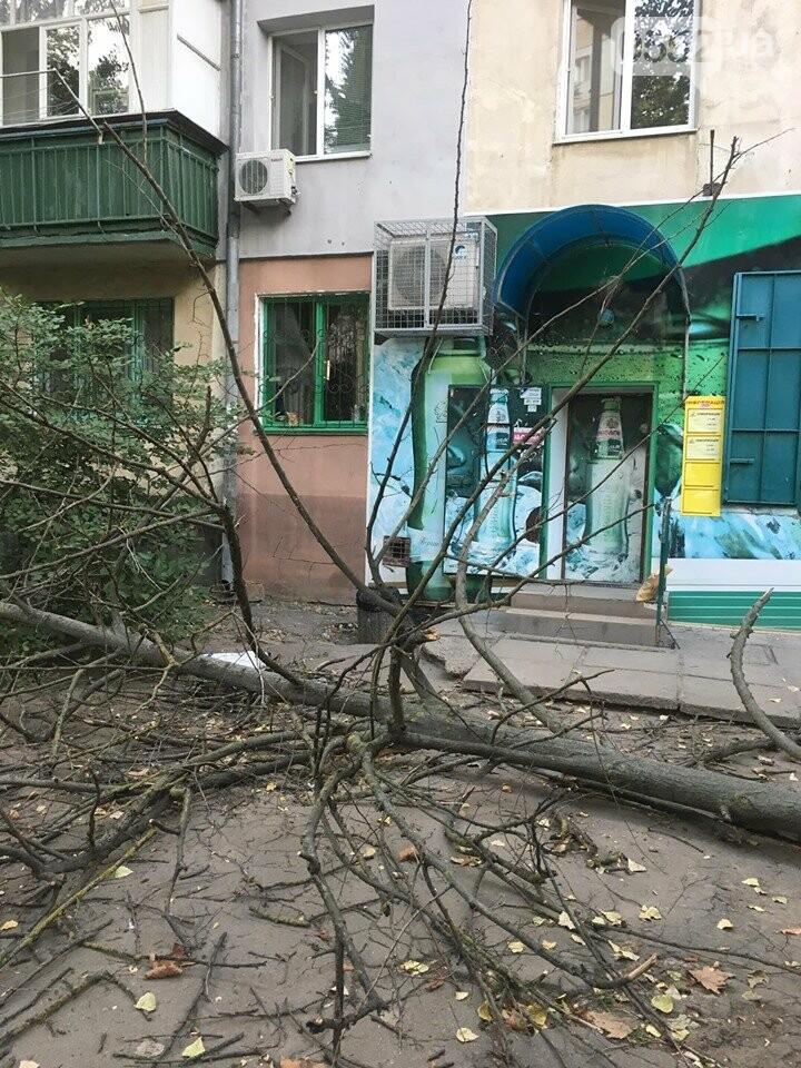 В Херсоне на головы пешеходов рухнуло огромное дерево: люди отделались шоком, фото-3