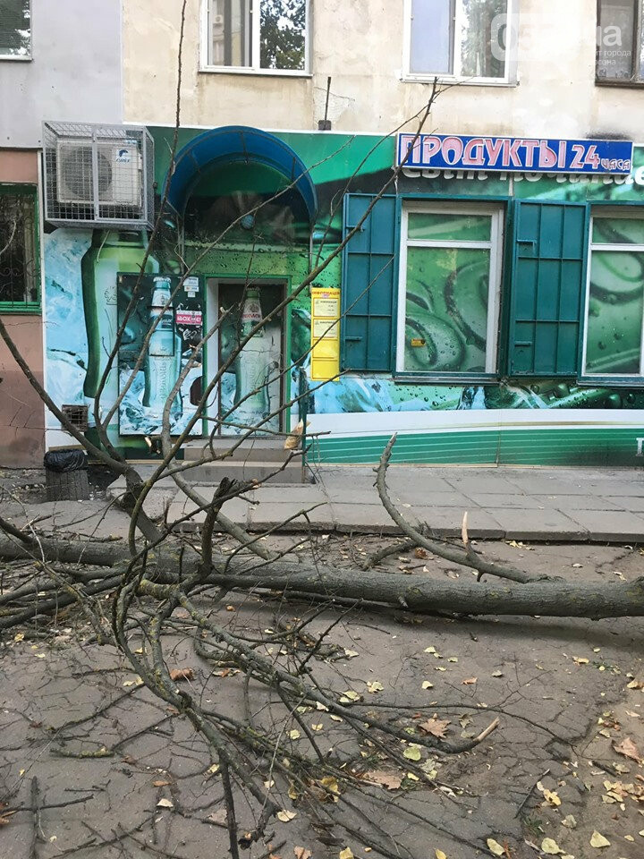 В Херсоне на головы пешеходов рухнуло огромное дерево: люди отделались шоком, фото-2