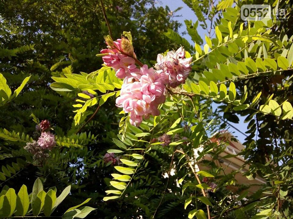 В Херсоне расцвела розовая акация: аномалия предвещает короткое «бабье лето», фото-1