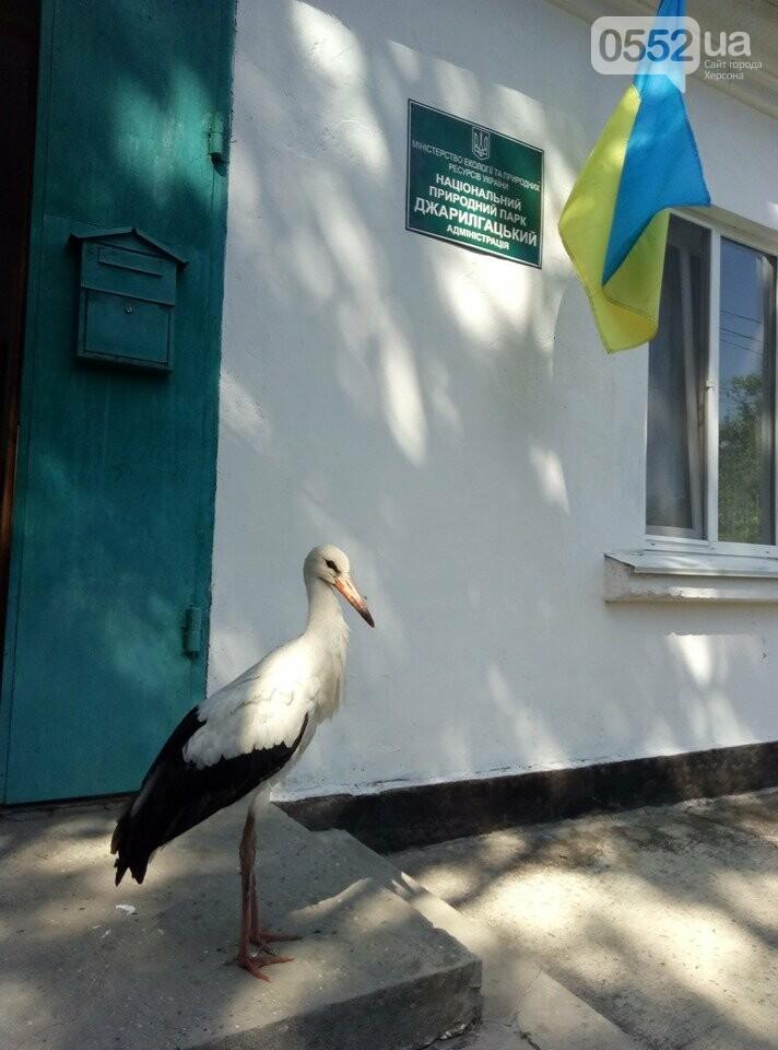 На Херсонщине отдыхающие спасли аиста, теперь он будет жить в заповеднике «Аскания-Нова» , фото-8
