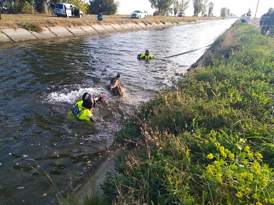 Косуля тонула в Каховском магистральном канале: люди пришли на помощь и спасли ей жизнь, фото-1