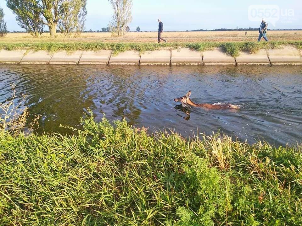 Косуля тонула в Каховском магистральном канале: люди пришли на помощь и спасли ей жизнь, фото-2
