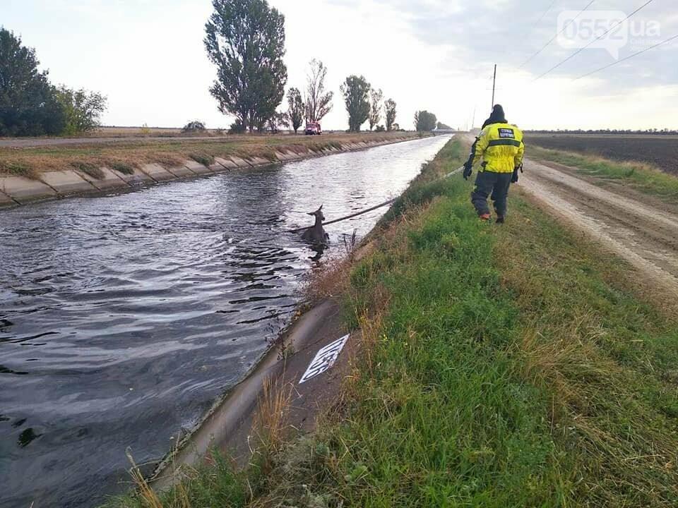 Косуля тонула в Каховском магистральном канале: люди пришли на помощь и спасли ей жизнь, фото-4
