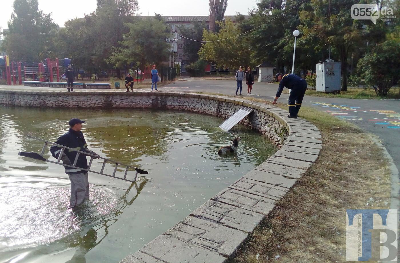 Люди спасли жизнь собаке в Новой Каховке: едва не утонула в водяной ловушке (ФОТОРЕПОРТАЖ), фото-2