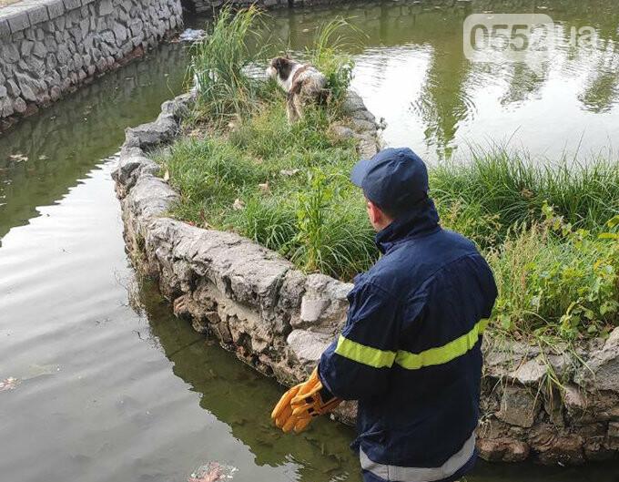 Люди спасли жизнь собаке в Новой Каховке: едва не утонула в водяной ловушке (ФОТОРЕПОРТАЖ), фото-4