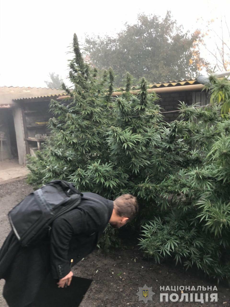 Как вырастить марихуану в украине семена конопли сативы