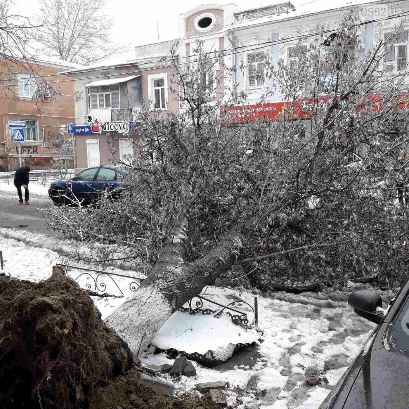 Древопад в Херсоне сегодня: штормовой ветер валит деревья на машины и автобусные остановки, фото-4