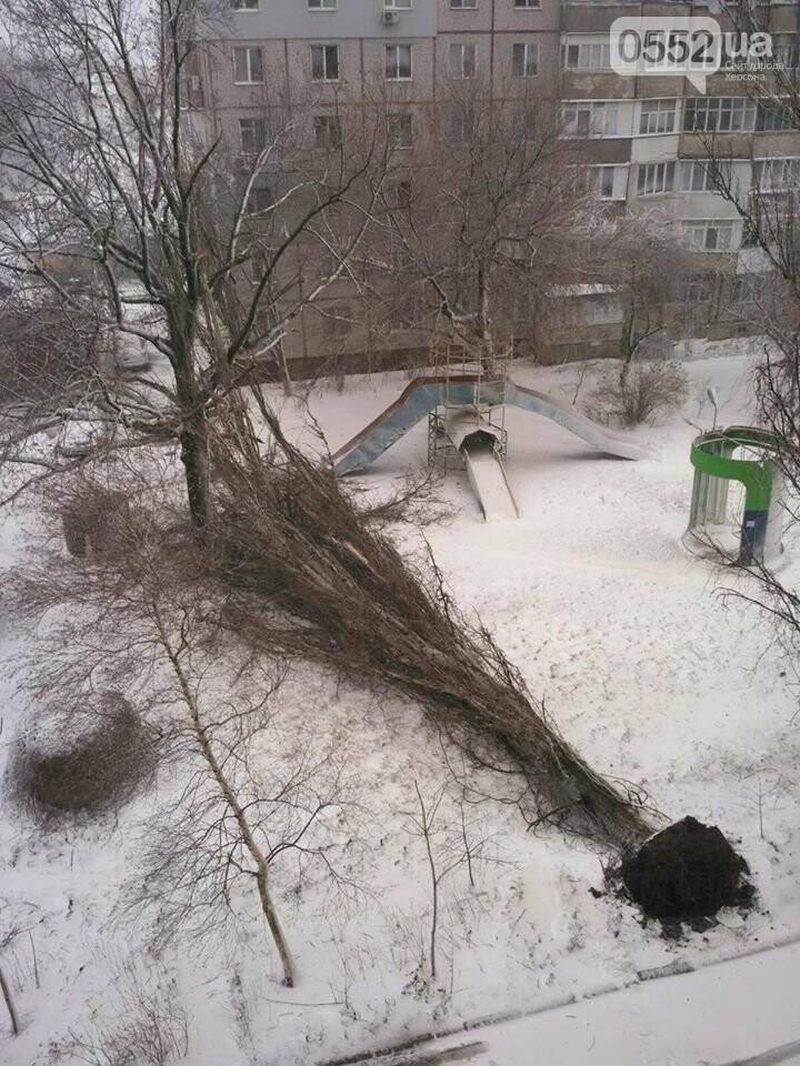 Древопад в Херсоне сегодня: штормовой ветер валит деревья на машины и автобусные остановки, фото-3