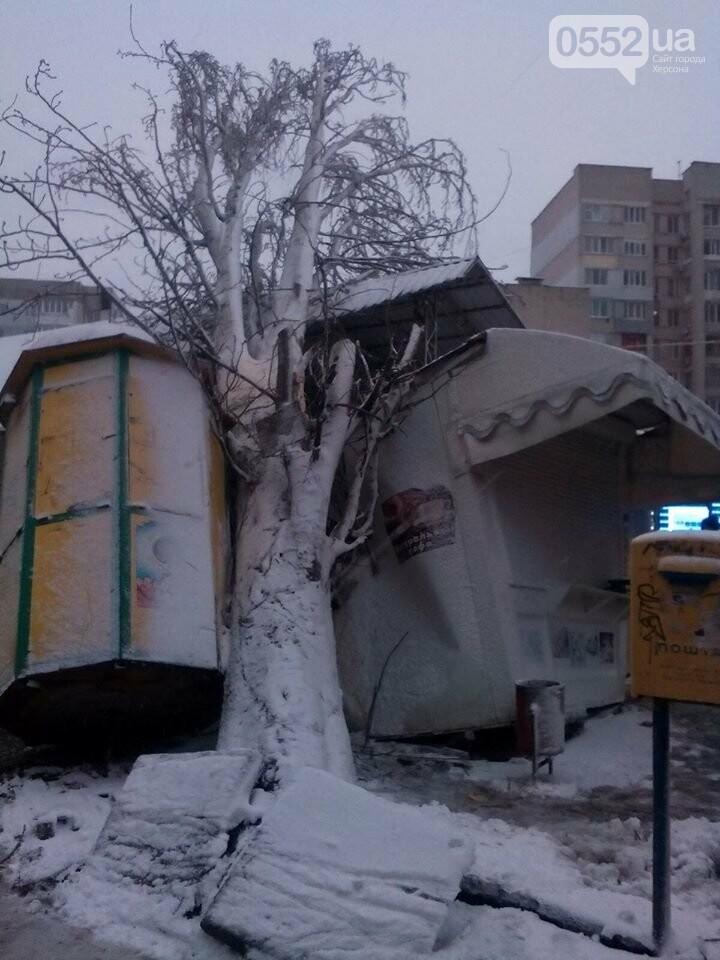 Древопад в Херсоне сегодня: штормовой ветер валит деревья на машины и автобусные остановки, фото-1